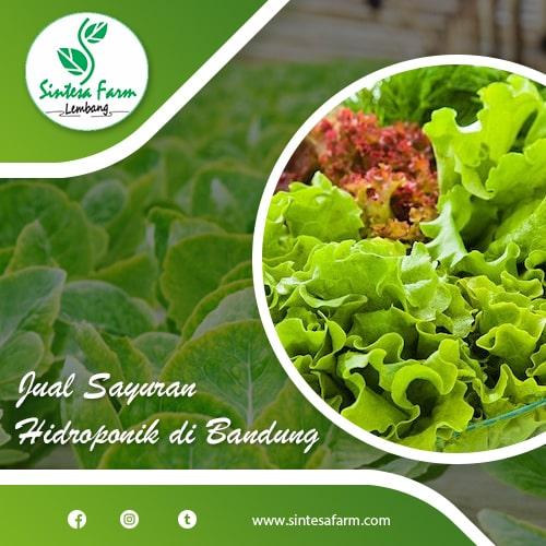 Jual Sayuran Hidroponik di Bandung