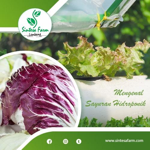 Mengenal Sayuran Hidroponik