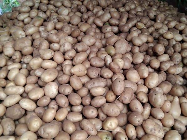 produk-kentang (2)