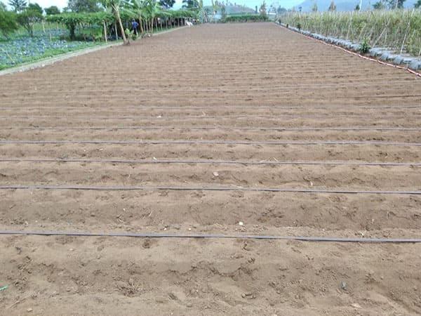 produk-kentang (3)