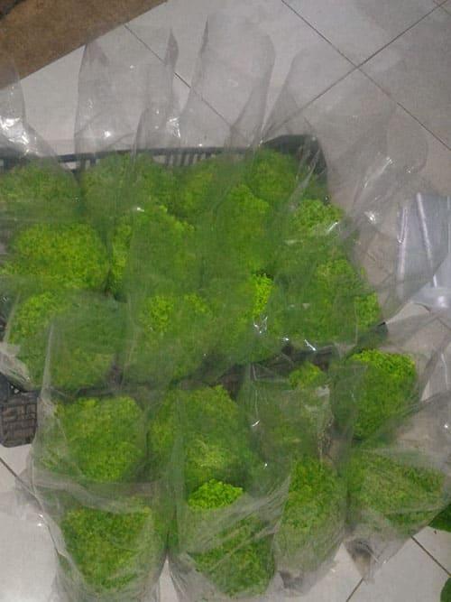 produk-selada (3)
